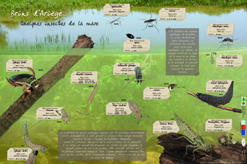 poster_insectes_mare_ptt