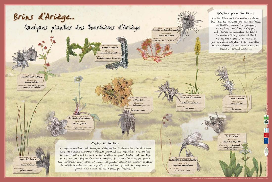 poster_plantes_tourbieres_siteAna