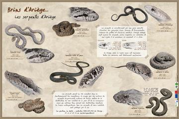 poster_serpents_ptt