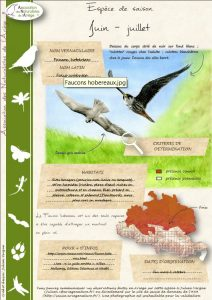 avis de recherche faucon