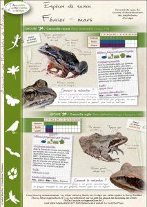 avis de recherche grenouille rousse