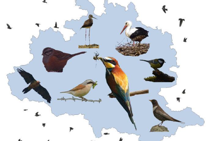 Oiseaux Ariège
