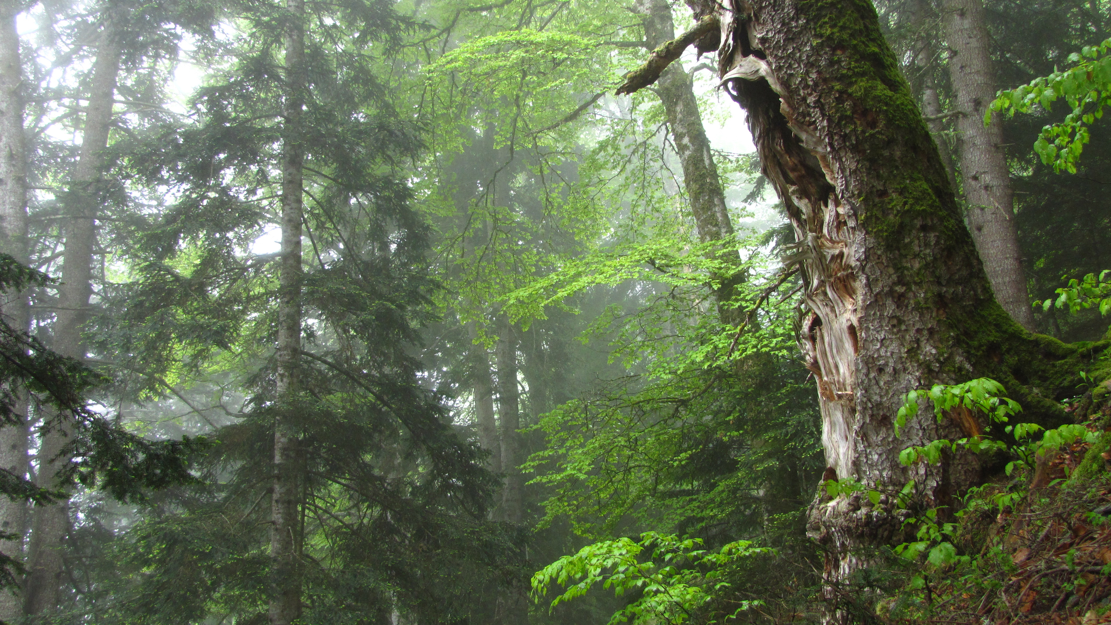 forêt d'Izard
