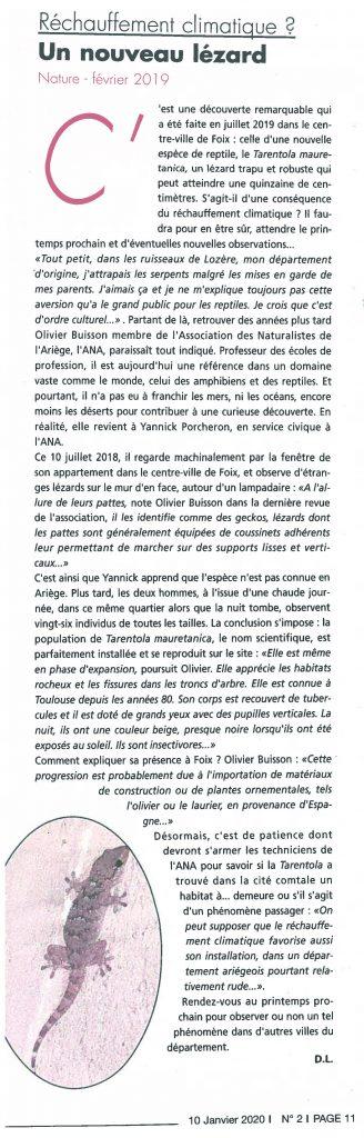 GAZETTE_10012020_Un nouveau lézard en Ariège