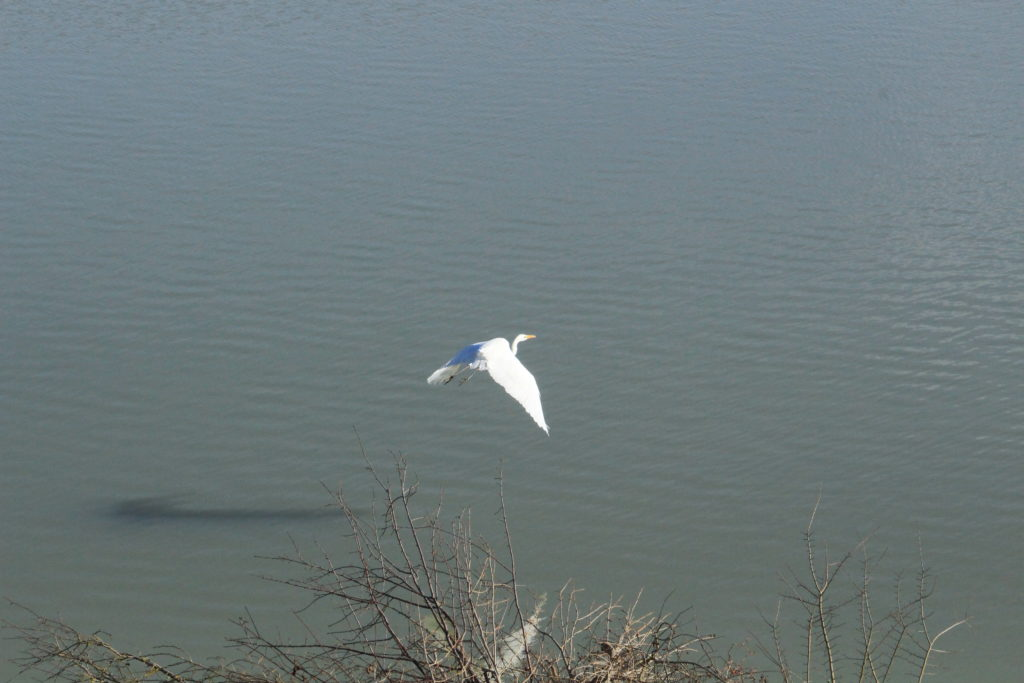Comptage Wetland_Ambre Luczynski